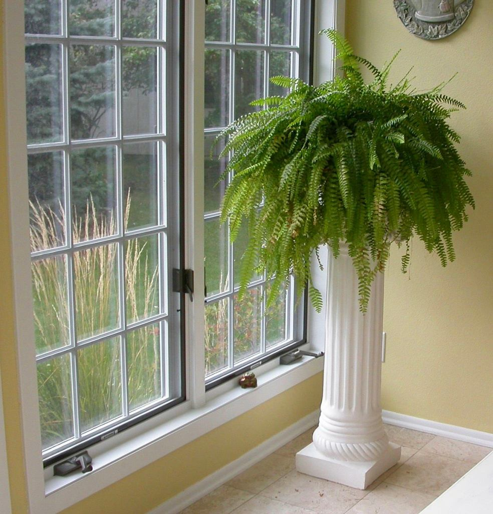 Цветы для восточного окна