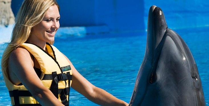как дельфины лечат людей