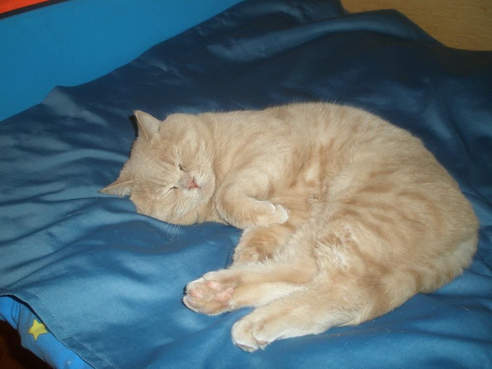 Артрит у кошек симптомы методы лечения лекарство для животного