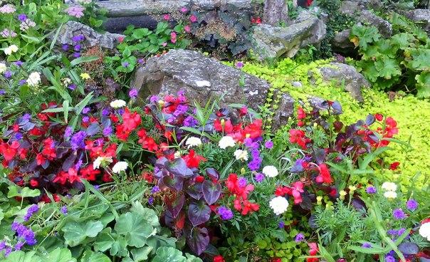 В Женеве очень много парков, в которых растут красивейшие цветы