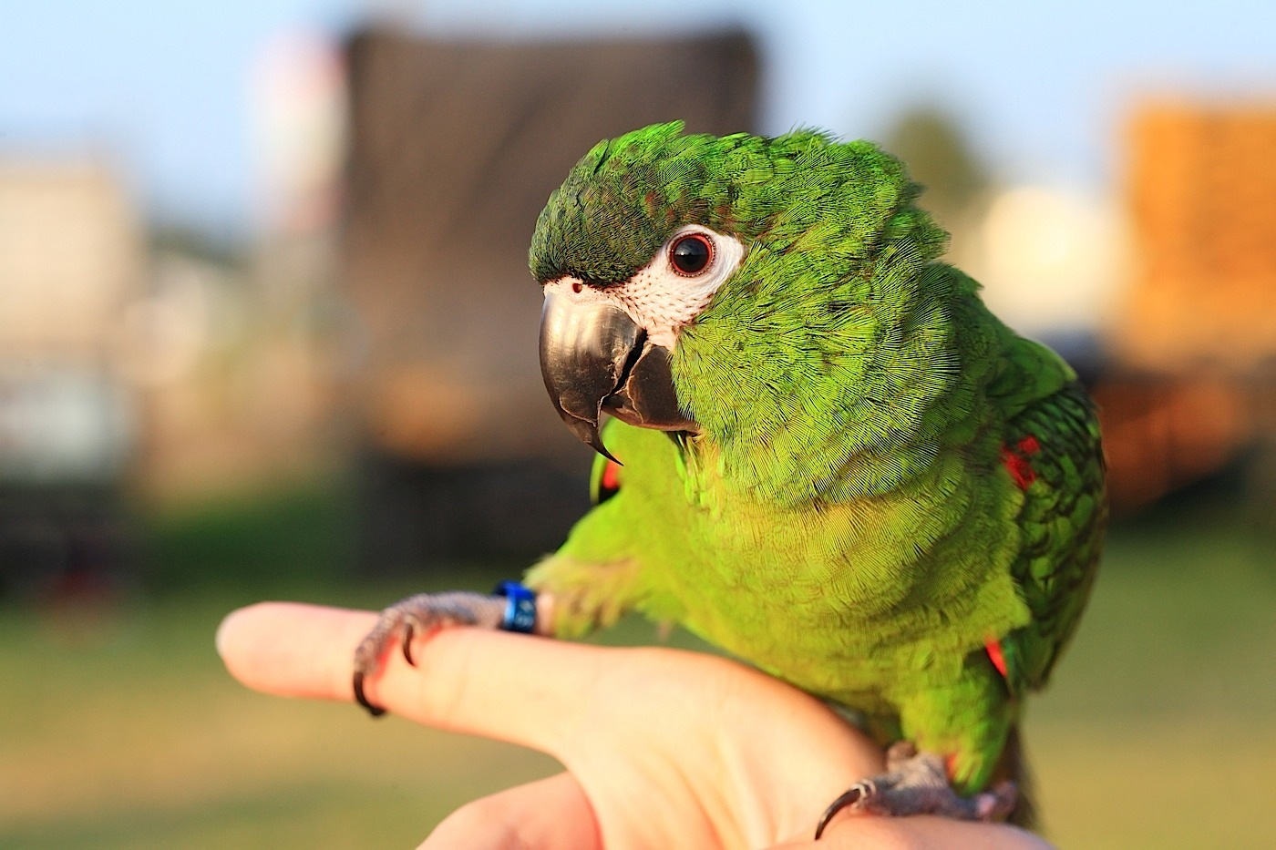 попугай на руке, близнецы