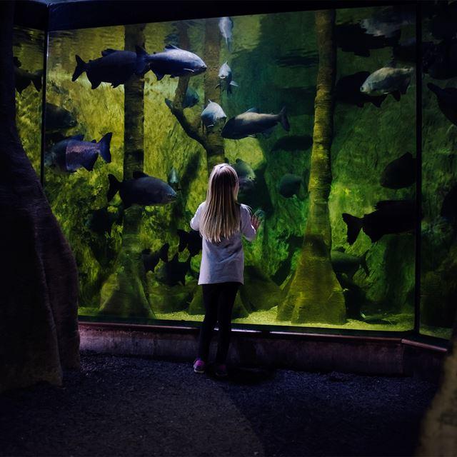 тропические рыбки в аквариуме
