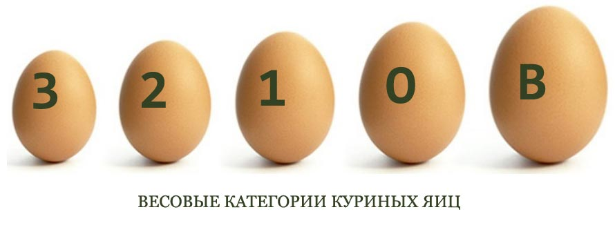 Весовые категории куриных яиц