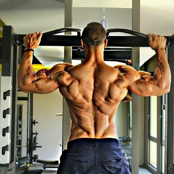 Картинки с группами мышц при тренировках
