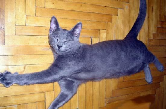 тайота имя для котенка вступающей ним союз