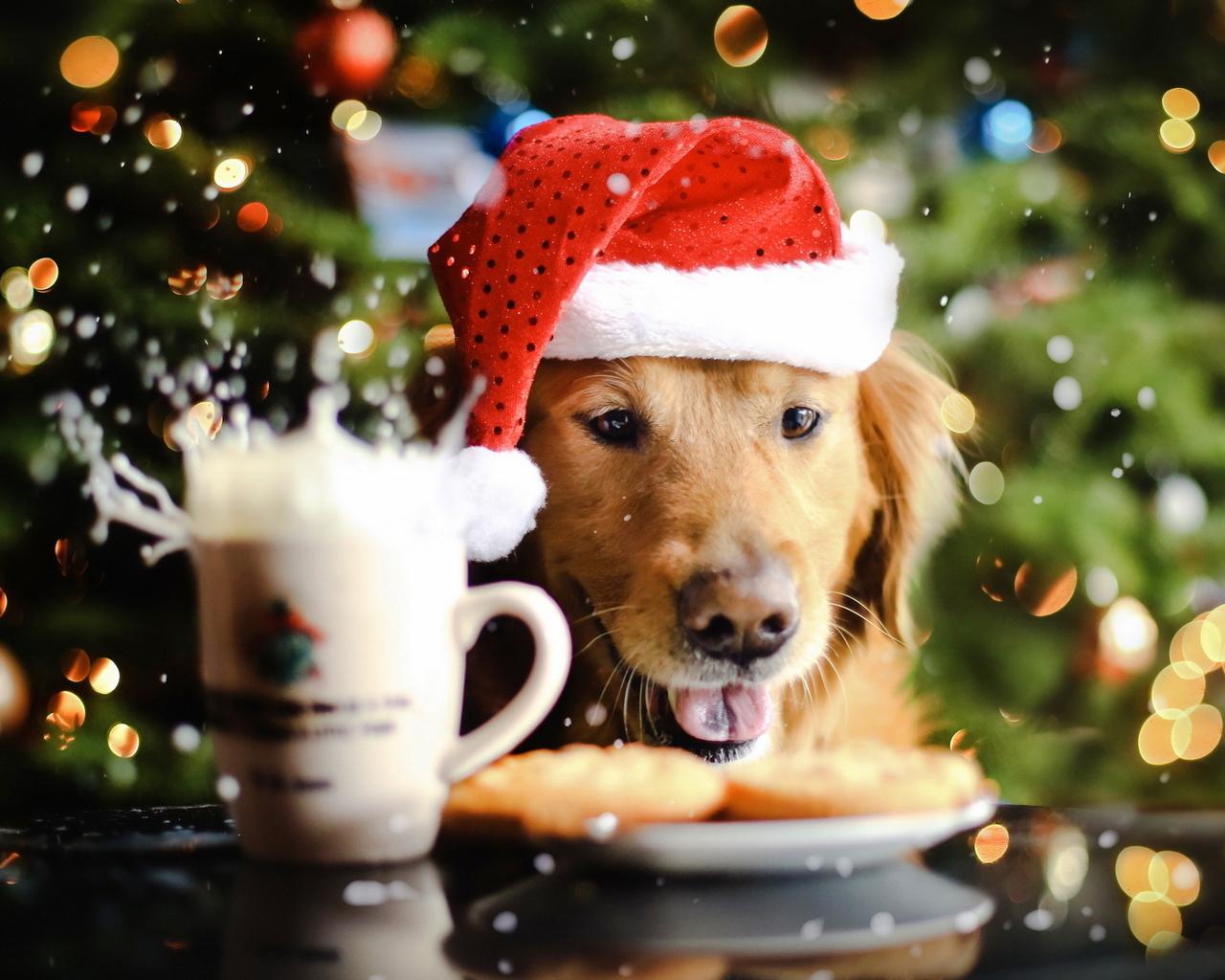 2018: как встречать год Земляной Собаки
