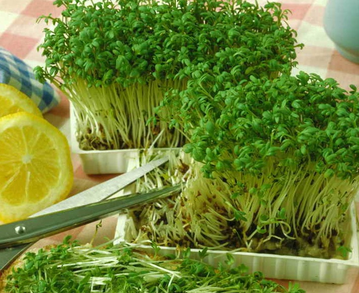Все о выращивании салата 69
