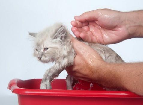 Kupanie kotyonka