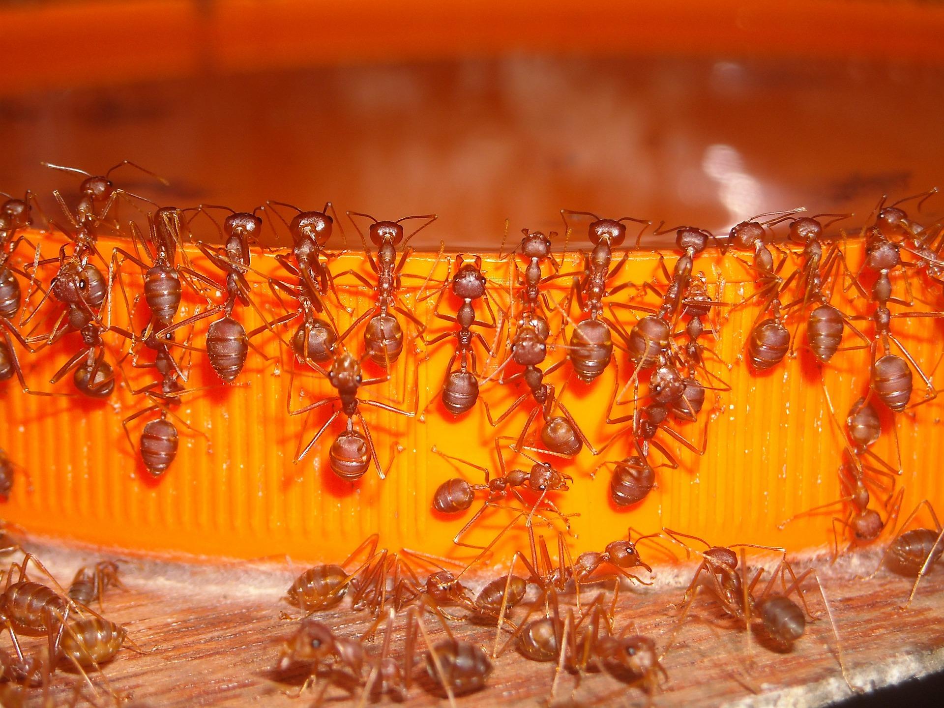 как быстро вывести паразитов из организма