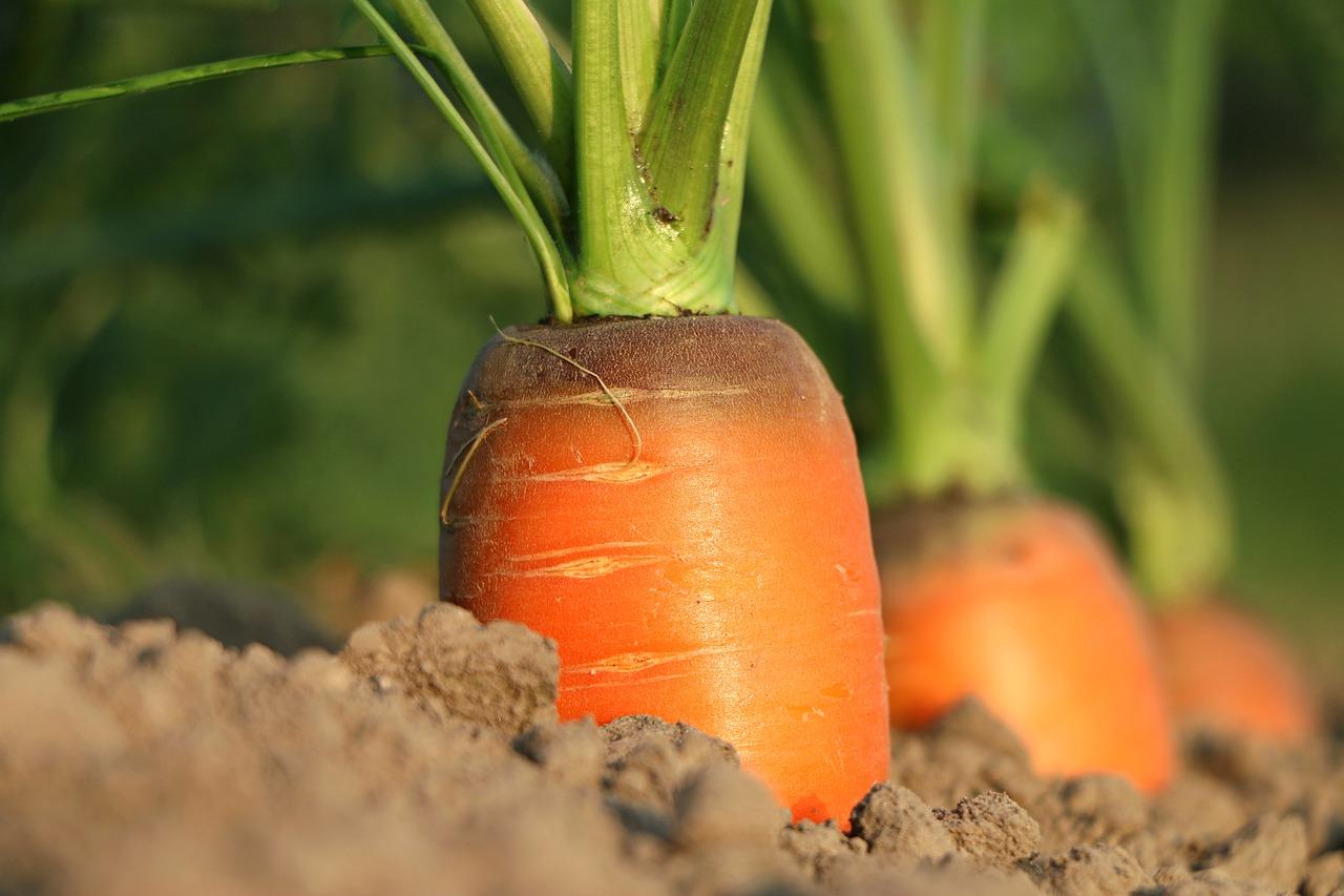 Картинки растущие овощи, женщине