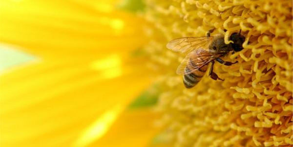 мед внешний вид