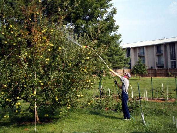 опрыскивание яблонь от парши