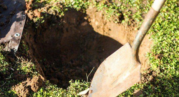 подготовка посадочной ямы для вишни_удобрение органическое_купить органическое удобрение_производство органических удобрений_купить биогумус_купить вермигрунт для рассады_купить вермигрунт универсальный_купить вермигумат_купить органическое удобрение оптом_удобрение органическое для овощных культур_удобрение органическое для плодовых кустарников_удобрение органическое для фруктовых деревьев_удобрение органическое для подкормки овощей_удобрение органическое для подкормки ягод_удобрение органическое для подкормки фруктовых деревьев_органическое земледелие