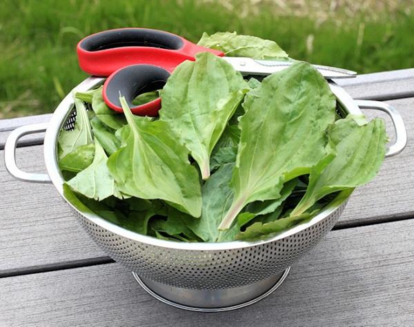 gastritis treatment of folk remedies