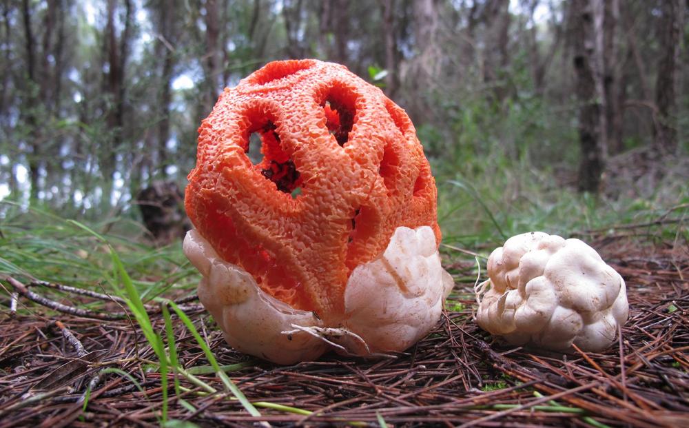 Картинки необычный гриб