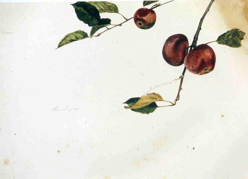 Эндрю Уайет. Яблоки на ветке, 1942