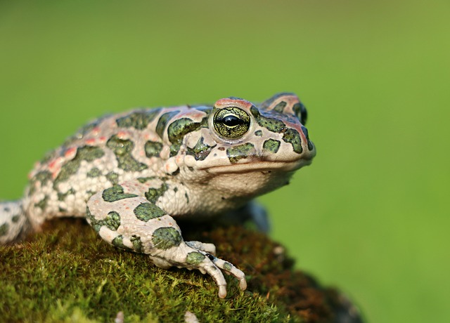 жаба по славянскому гороскопу
