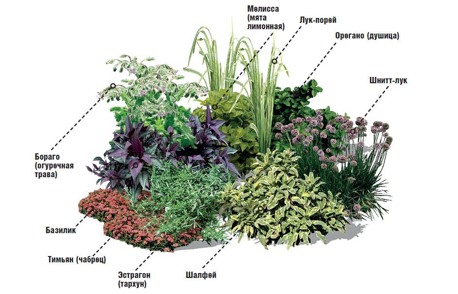 Как сажать многолетние травы 10