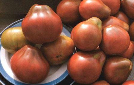 сорт томатов трюфель