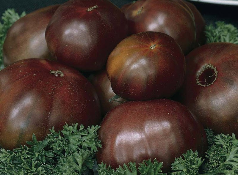 черные томаты сорта фото