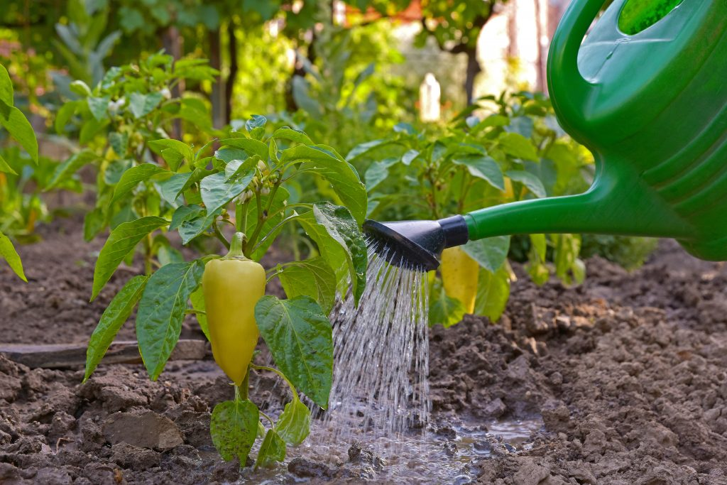 Картинка дождь поливает огород