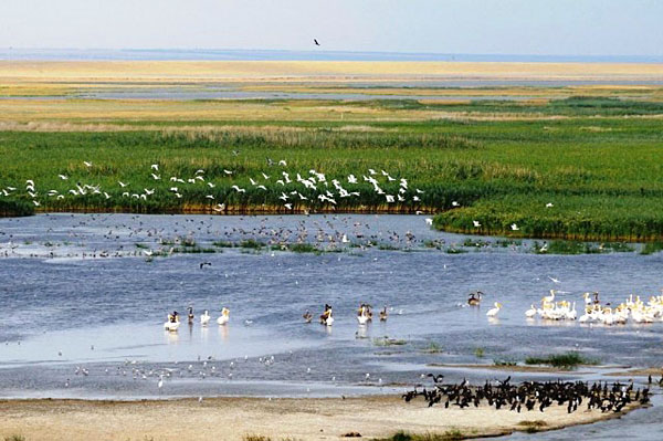 Птичьи базары на озере Маныч-Гудило