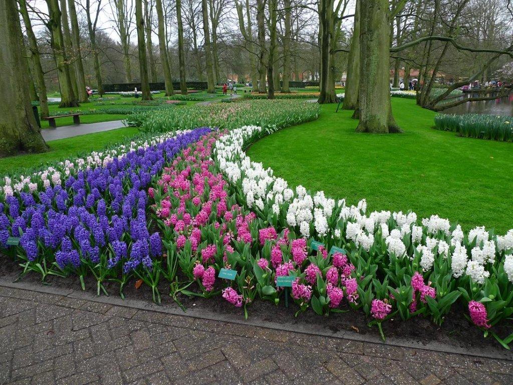 Тюльпаны у дорожки