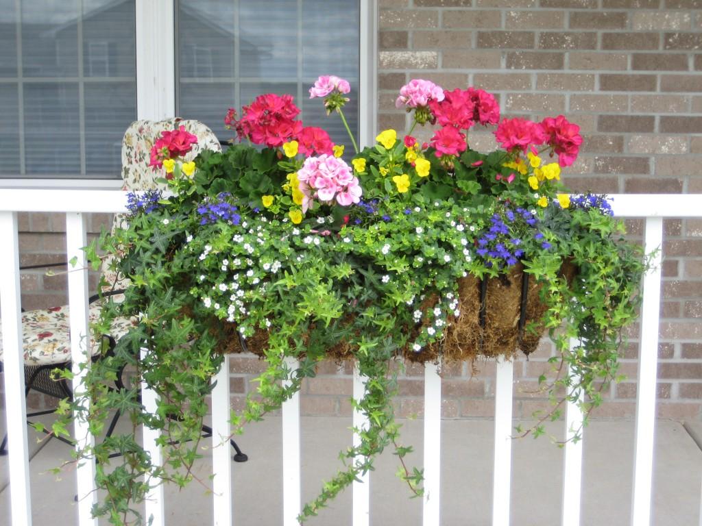 Цветы в балконных ящиках фото