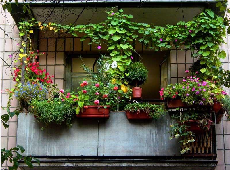 Цветы на балконе и лоджии