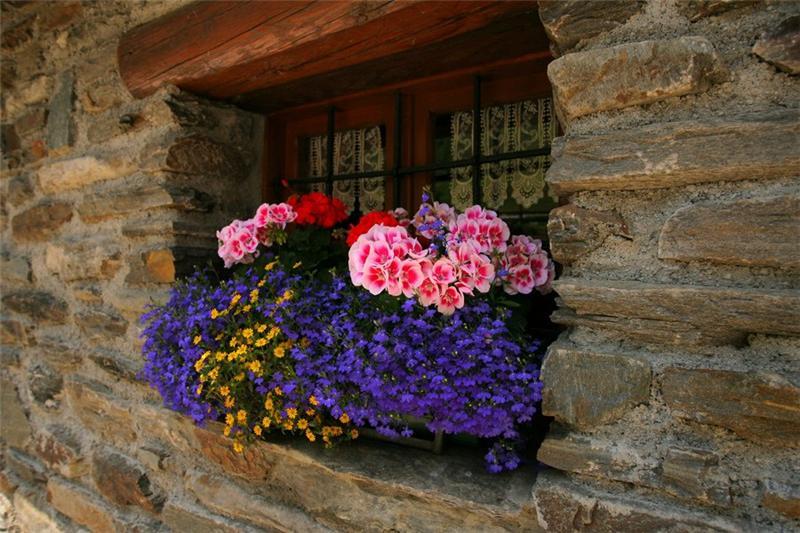 Балконы и окна в цветах