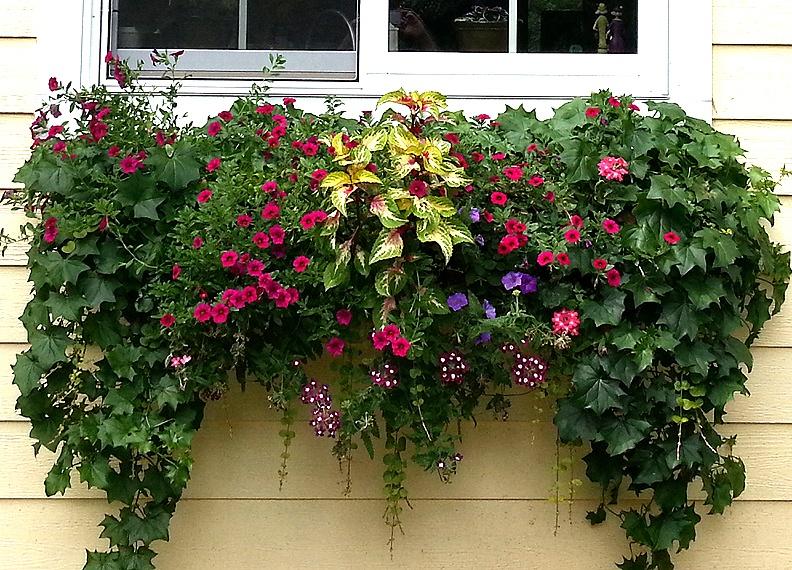 Цветы в контейнерах для сада