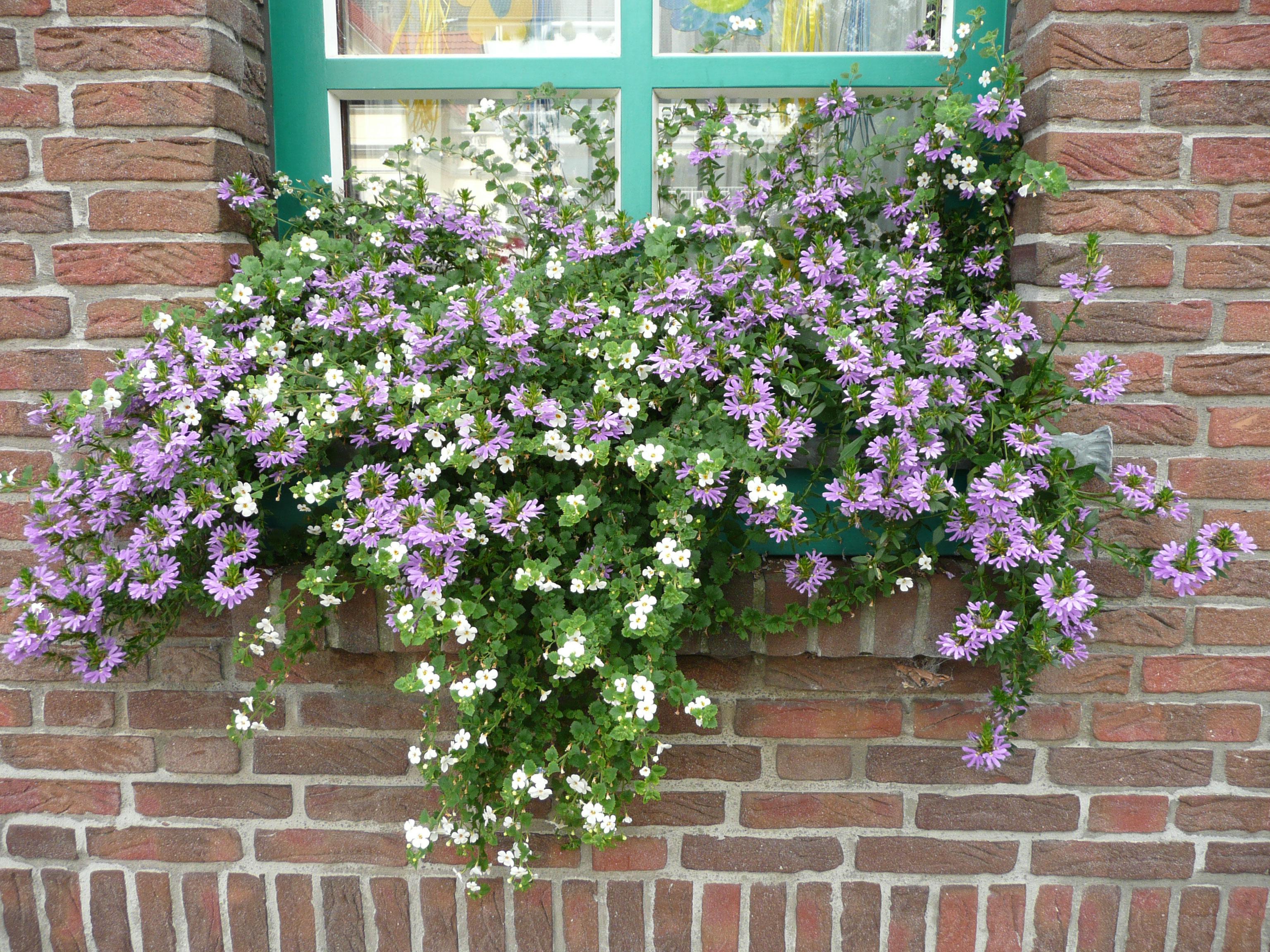 Ампели, цветущие все лето