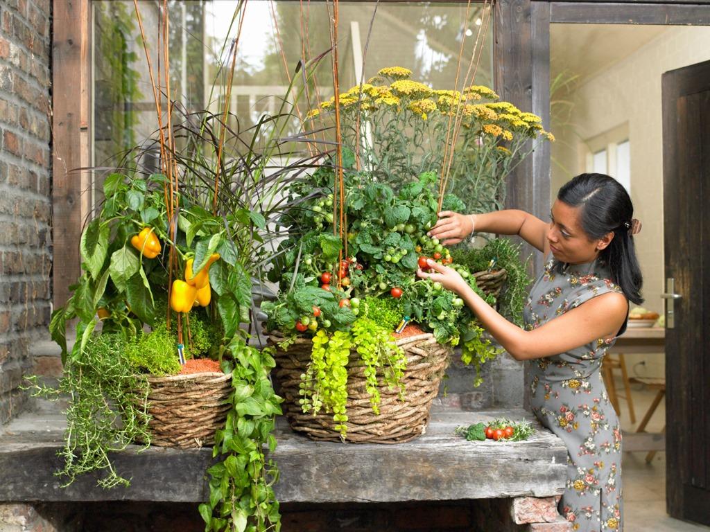 Как выращивать овощи на балконе
