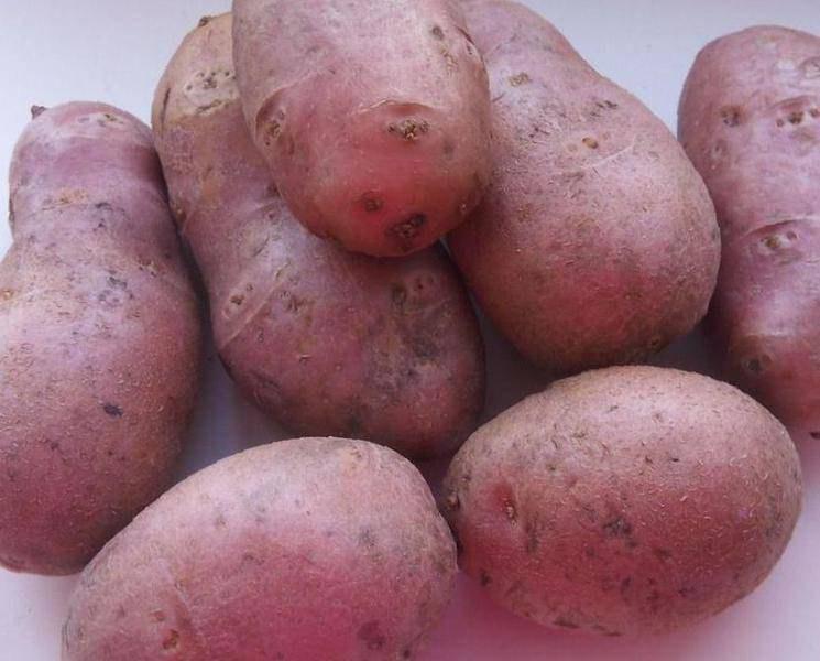 картофель фото и названия