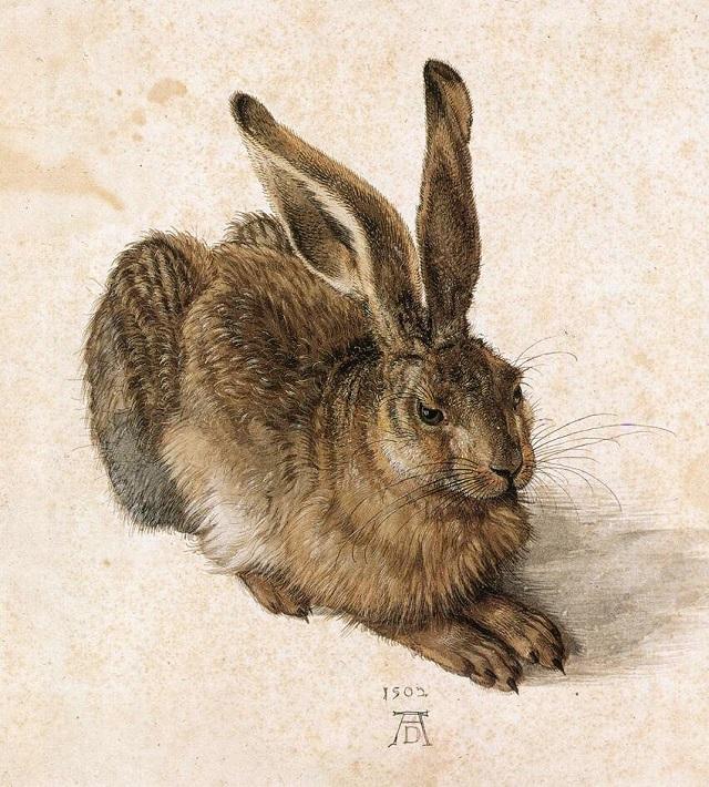 Молодой заяц, 1502 г.