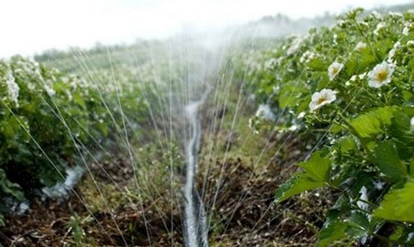 полив поля