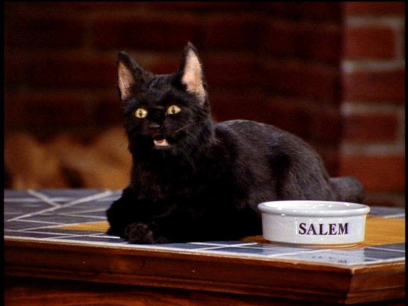 Cat Salem (by Salem)