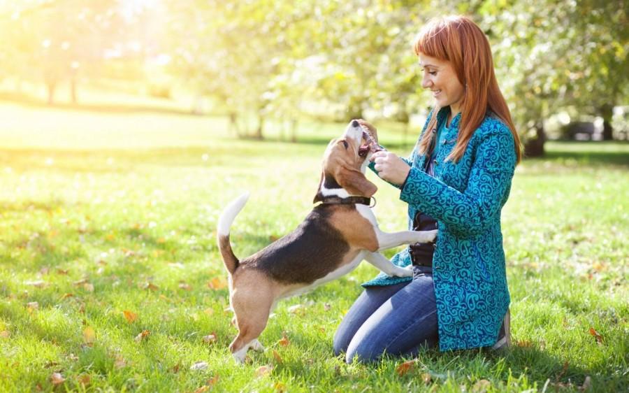 Фото домашних животных с людьми