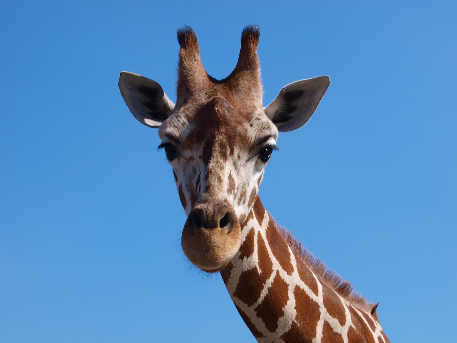 картинки с жирафчиком августе ночи