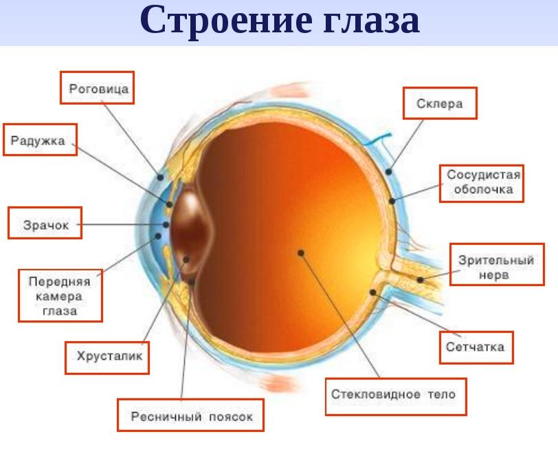 Глазные капли Актипол – особые указания