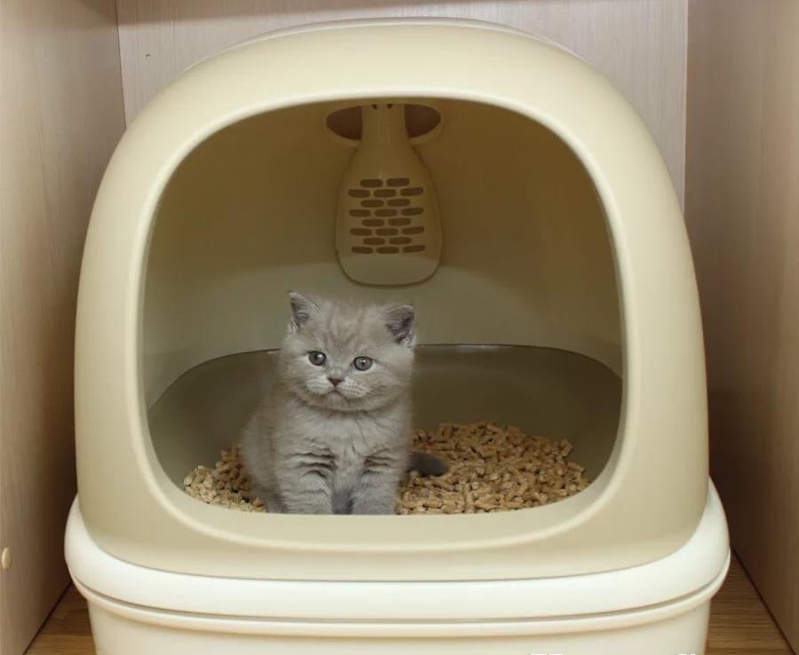биотуалет для котят