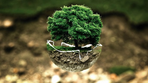Деревья-талисманы