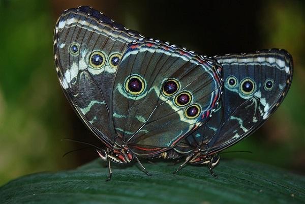 Приметы, связанные с бабочками