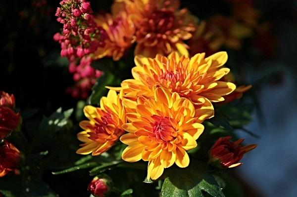 Осенние цветы и их магические свойства