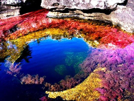 Загадки планеты: многоцветная река Каньо-Кристалес