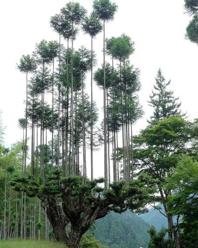 Ноу-хау Страны восходящего солнца: метод дайсуги