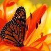 Baterfly