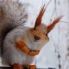 happysquirrel