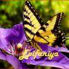 Epifaniya