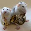 Как помочь крысам подружиться